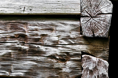 Old Wood Study 24