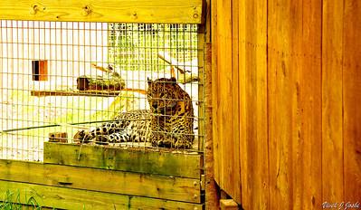 Living Treasures Animal Park,New Castle, PA
