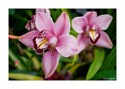 Taken At Phipps Conservatory, Pittsburgh