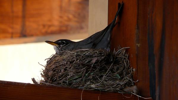 Desert Pearl Inn's Bird Suite