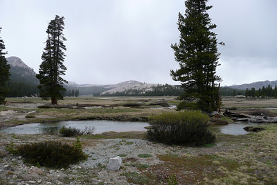 Toulumne Meadows, Yosemite NP