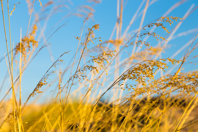 Kakadu Grasses