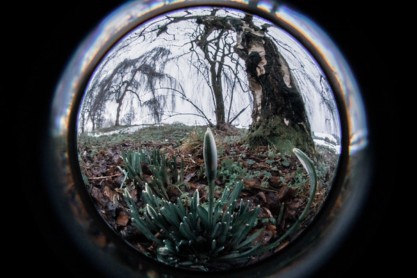 Something Special - first snowdrops