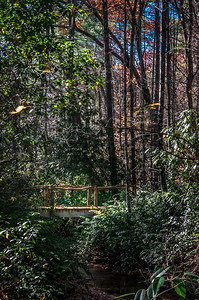 Forest Trail Bridge