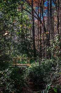 Forest Trail Bridge
