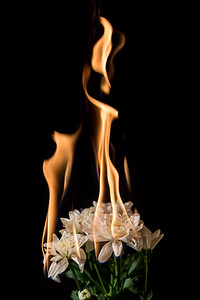 white flower on fire