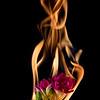 freesia flower on fire