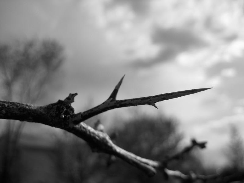 Cruel Thorn