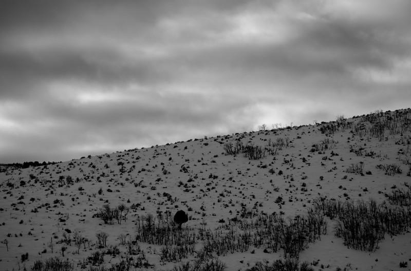 Hillside in Winter