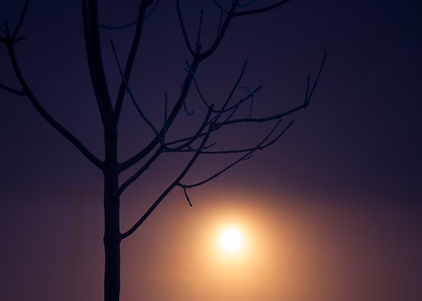Streetlight in Morning Fog