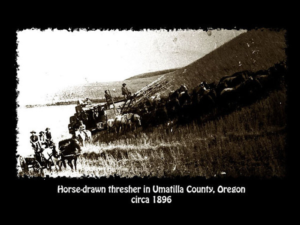 Horsedrawn thresher, circa 1896, in Umatilla County, Oregon.