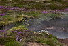 I'll remember all the colorful wildflowers that surrounded and mingled with the geysers, springs, fumarole, etc. as much as the geothermal features themselves.