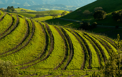 Terraced Vineyard, Ballard Canyon