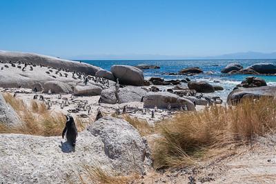 Boulders penguins II