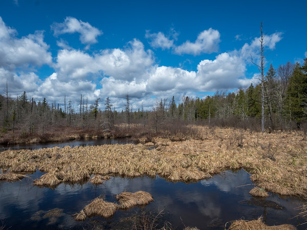 The East Fork Of the Chippewa River