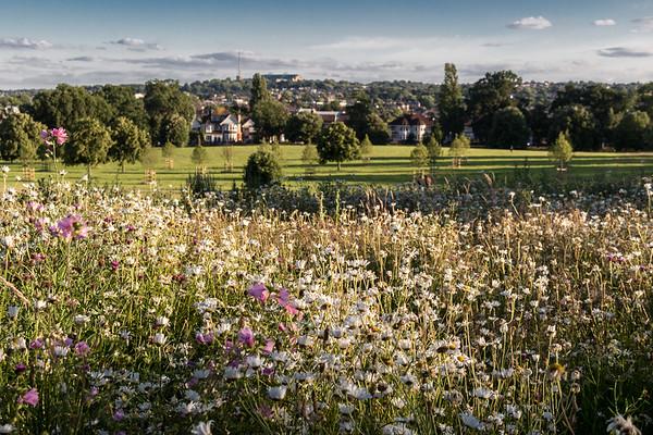 Wild Flower Meadow - Broomfield Park