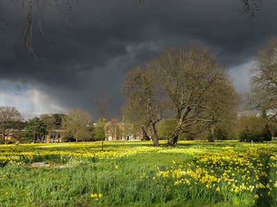 Spring Storm in Trent Park 2