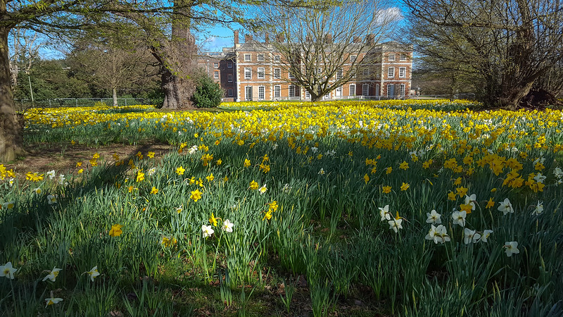 Trent Park Daffodils