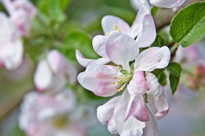 Spring's Pastel Palette