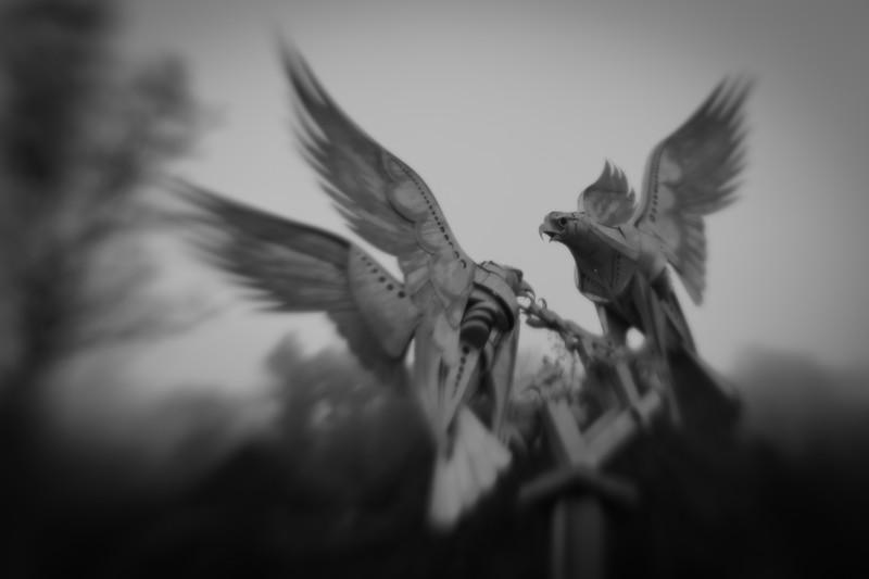 17 (365) Malvern buzzards