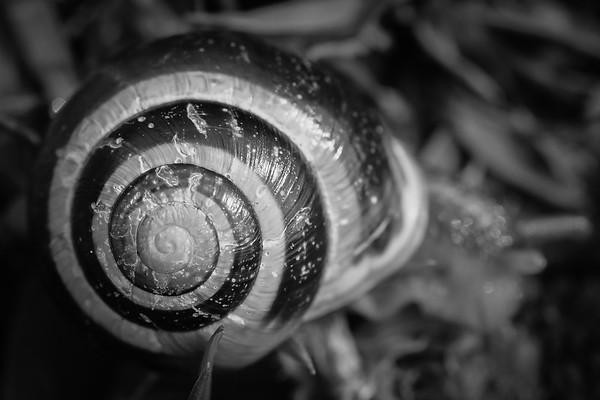56 (365) Snail shell