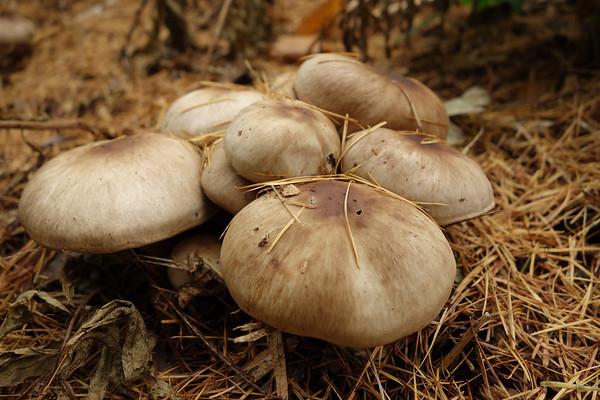 362 (365) Mushrooms