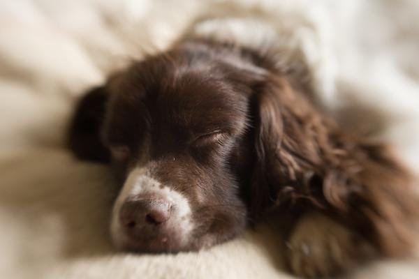 363 (365) Dog tired