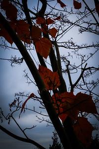 351 Autumn leaves