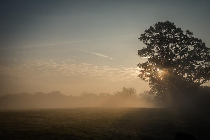 Autumn Morning Mist