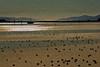 Bodega Bay Mud Flats
