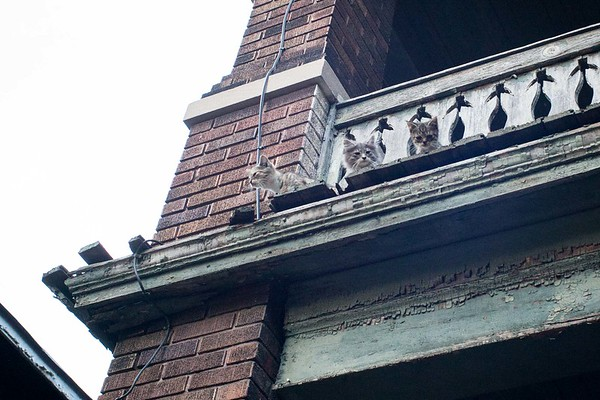 3 kitties on the 2nd floor.