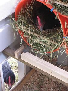 Nestbuckets in use