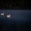 Couple's Swim