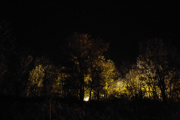 Lighted Forest