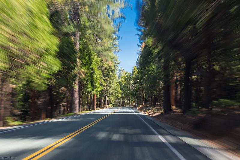 in the Sierra Nevadas