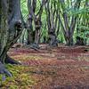 Spring Petrichor, Beech Landscape, Dulsmead Hollow