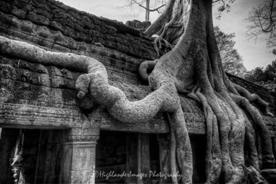 Trees of Ta Prohm, Cambodia