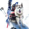 Ski Touring Husky