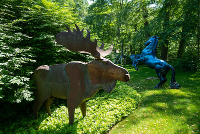 moose and horse