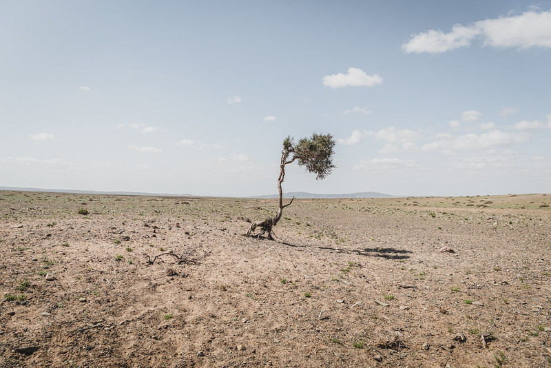 Mongolia, Gobi, 2019. Desertification is threatening traditional livelihoods in Mongolia. The average temperature in Mongolia has increased by 2.1C since 1940, more than double the rise of average global temperatures, according to the UN Environment Programme.