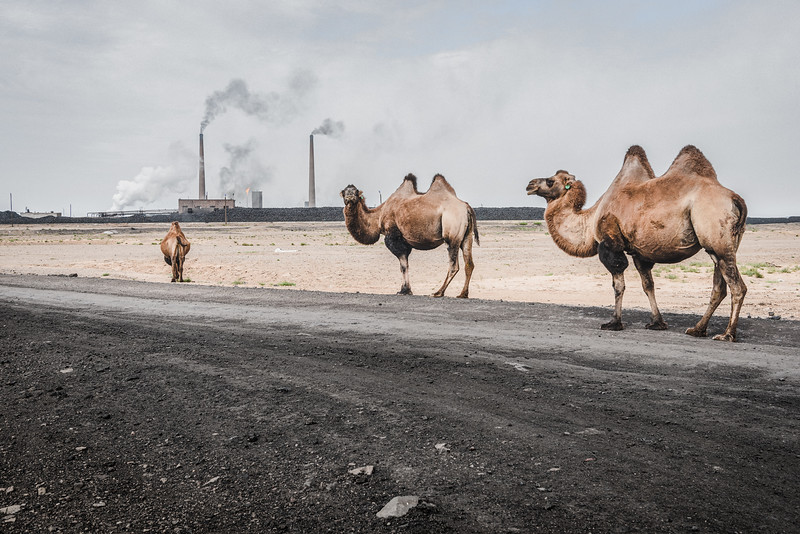 "Mongolia, Cogtcėcij, 2019. Camels in front of a coal refinery in the Gobi Desert. Mineral-rich Mongolia, labeled ""the next Qatar"" by The Economist, is experiencing an unparalleled mining boom. But as mega-mines like Oyu Tolgoi ramp up production, they are creating distrust and conflict with herder communities. The rapid rise in mineral extraction raises concerns about how herding can survive mining."
