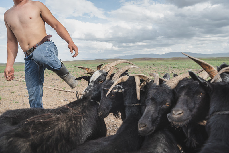 Mongolia, Togrog, 2019. A shepherd prepares his goats for milking them. Mongolia weathered dzuds in the last 10 years, all against the backdrop of a drought linked to climate change. A total of 21.5 million animals died during those periods. For herders who measure their wealth in animals, a dzud this extreme is crippling. Scientists predict more frequent disasters of this magnitude in the future.