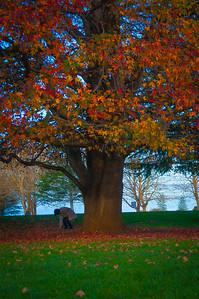 Cornwall Park, Auckland, 2014.