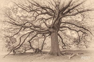 S23 Tesla Tree, Barn Hoppitt
