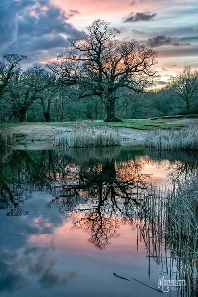B1 Ancient Oak Reflection IGPOTY Action Oak 2nd Place