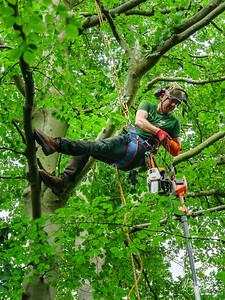 Daniel Shuker, Conservation Arborist