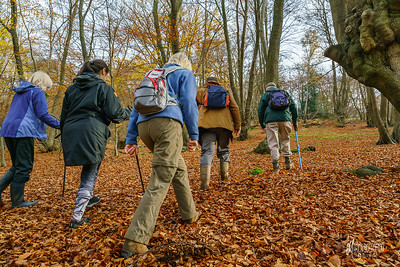 Walking Group, Buckhurst Hill Community Association