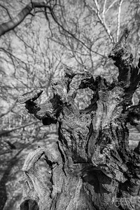 BW10 Disintegration 2 in Epping Forest