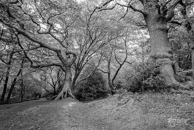 BW13 Oaks of Pole Hill