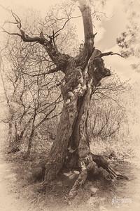 S22 Oak, Barn Hoppitt